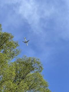 明治神宮上空を飛行機が行く