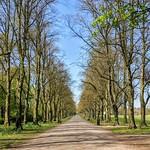Tree line path at Haslam Park