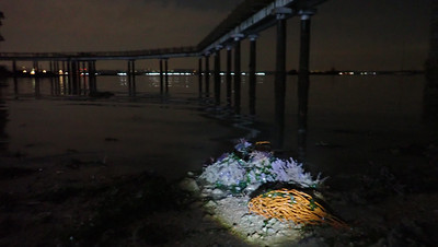 Marine life on and under jetty legs, Changi May 2021