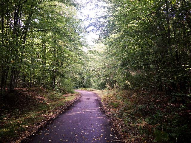 Bialowieski forest path