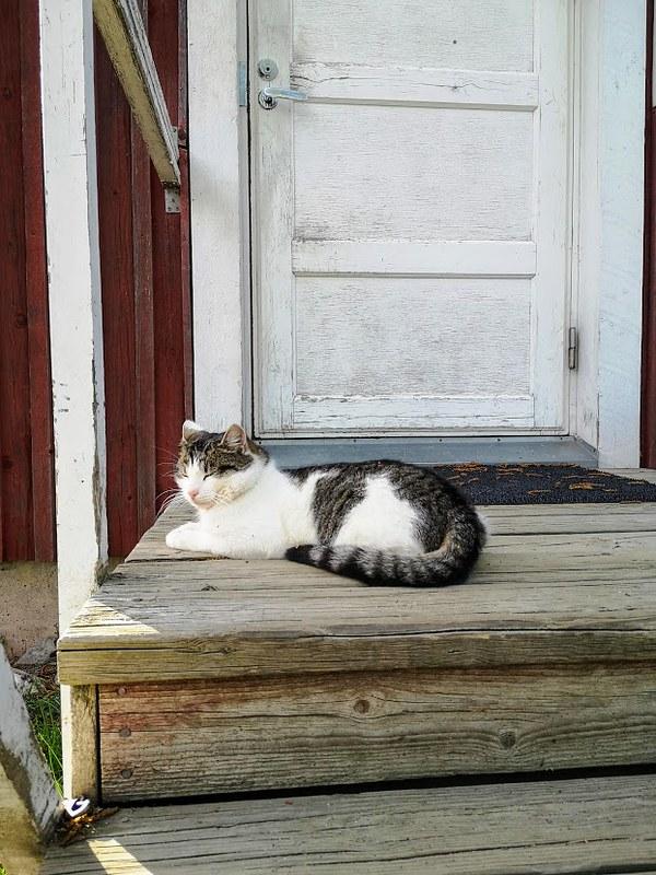 kiviniemen kissa