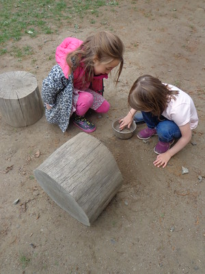 finding insects