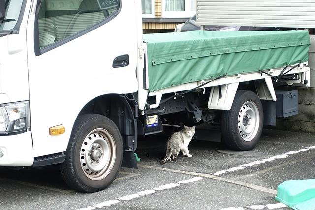 Today's Cat@2021−05−28