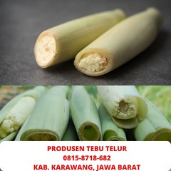 0815-8718-682 (Telp/WA) Produsen Terlaris Tiwu Endog Tanjung Periok