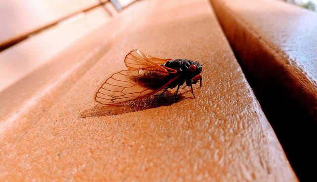 Cicada on a bench