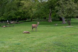 YOGA + HIKING Richmond & Wimbledon Park-187