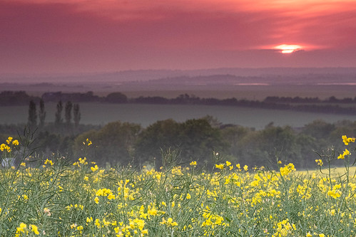 yellow essex canewdon sunset red orange seed rapeseed