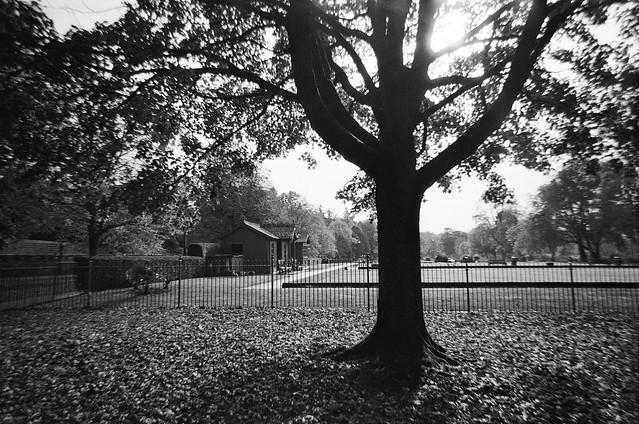 Tree Light. Kodak M35 + XP2. 2020