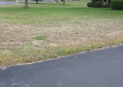 home lawn along driveway with half brown and half green grass
