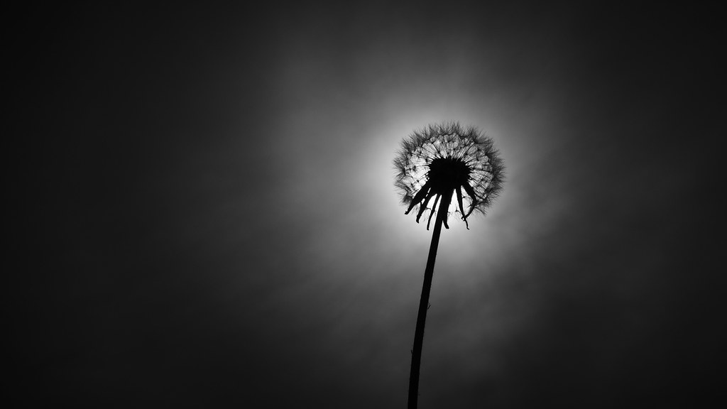 148/365 : Well that's just dandy