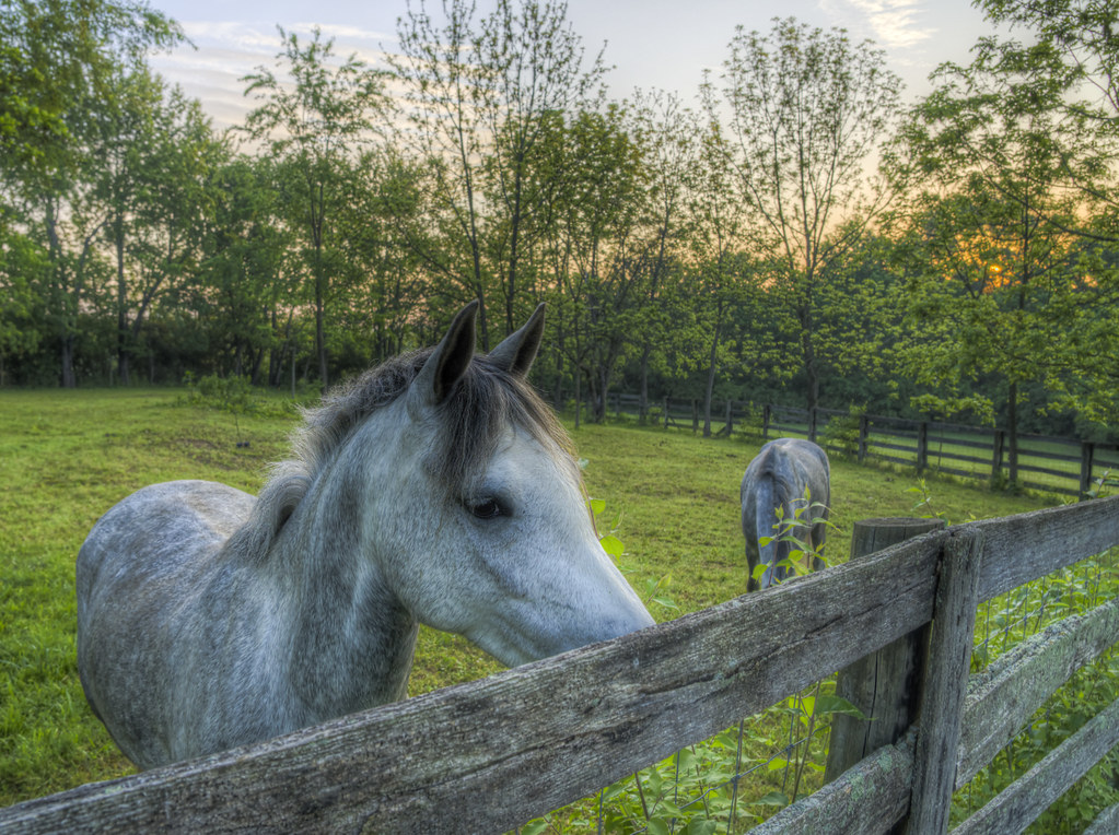 Young Ponies at Sunrise