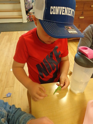 finding the bean seeds in the pod