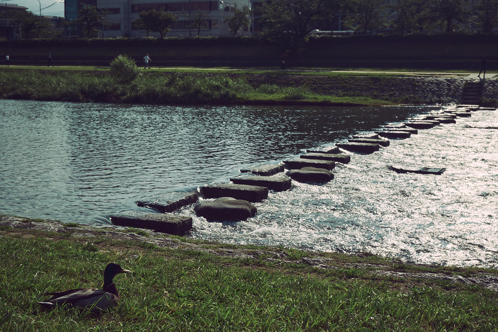 Kyoto Kamo River in Early Summer Morning