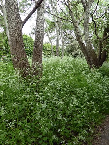 Spring Pathways