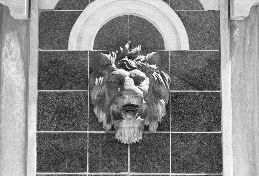 Lionhead Portrait_