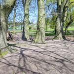 Trees and shadows at Haslam Park