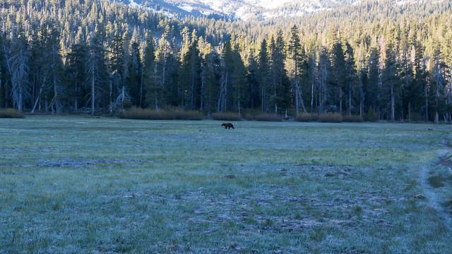 _Z502081Big Meadow Bear