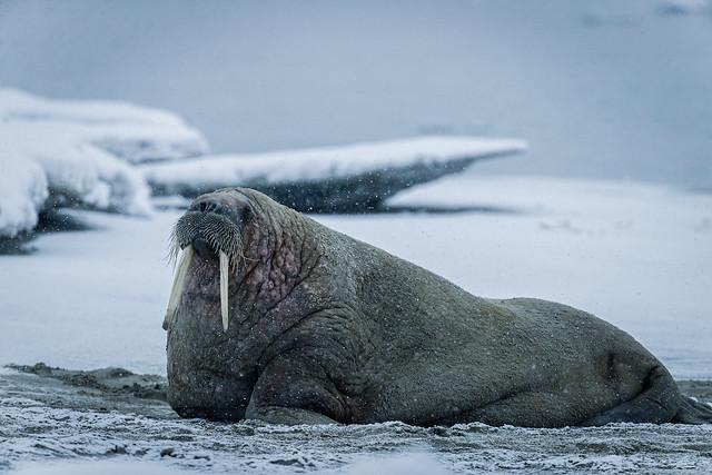 ARTICLE: Wild Location - Svalbard