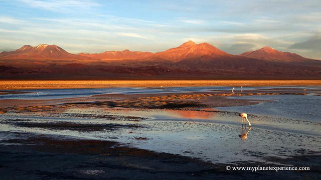 Laguna Cejar - Salar de Atacama, Chile