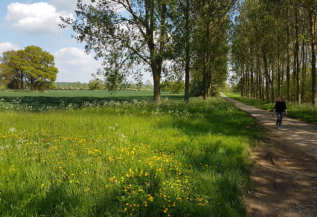 Country road near Brixworth, Northants