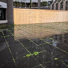 The Grid 🌱 #rainy #pattern