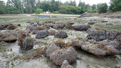 Living reefs at East Coast Park, May 2021