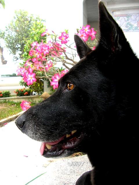 โรคไต ชนิดเฉียบพลัน ในสุนัข
