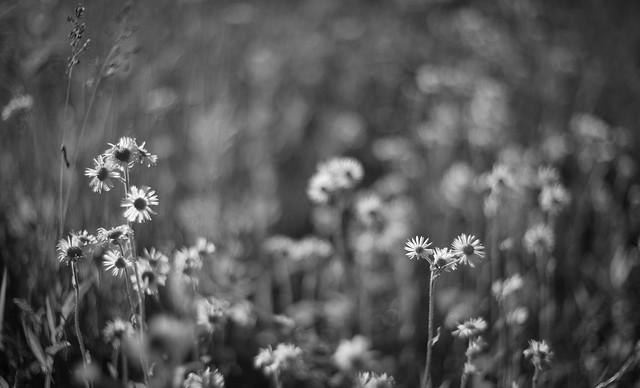 wild flower blur