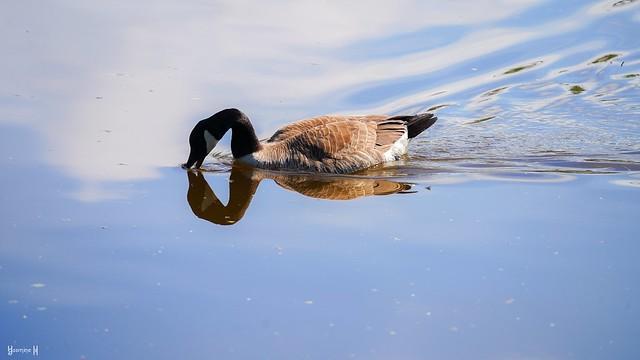 9789 - Goose