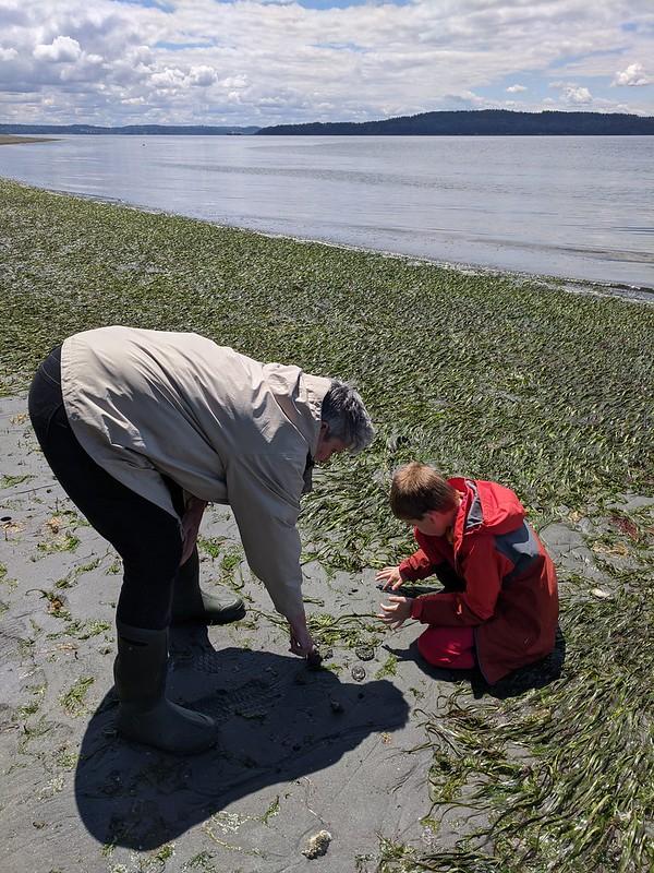 Low Tide Beach: Anemones