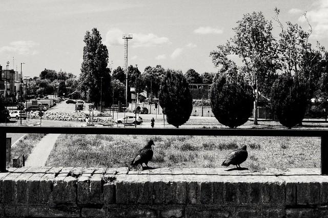 Ferrara, may 2021