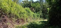 Sur la piste RG de la Sainte-Lucie : le 1er roncier