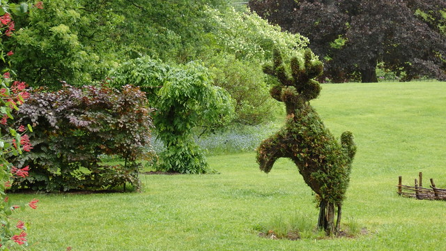 Topiary reindeer