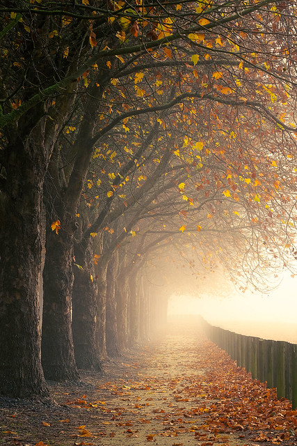 Autumn path to the light