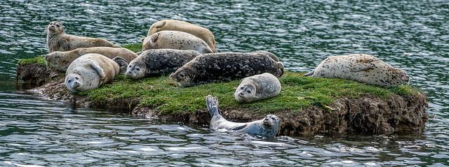 Seal Team Ten