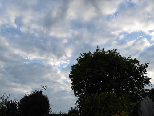 Garden Clouds