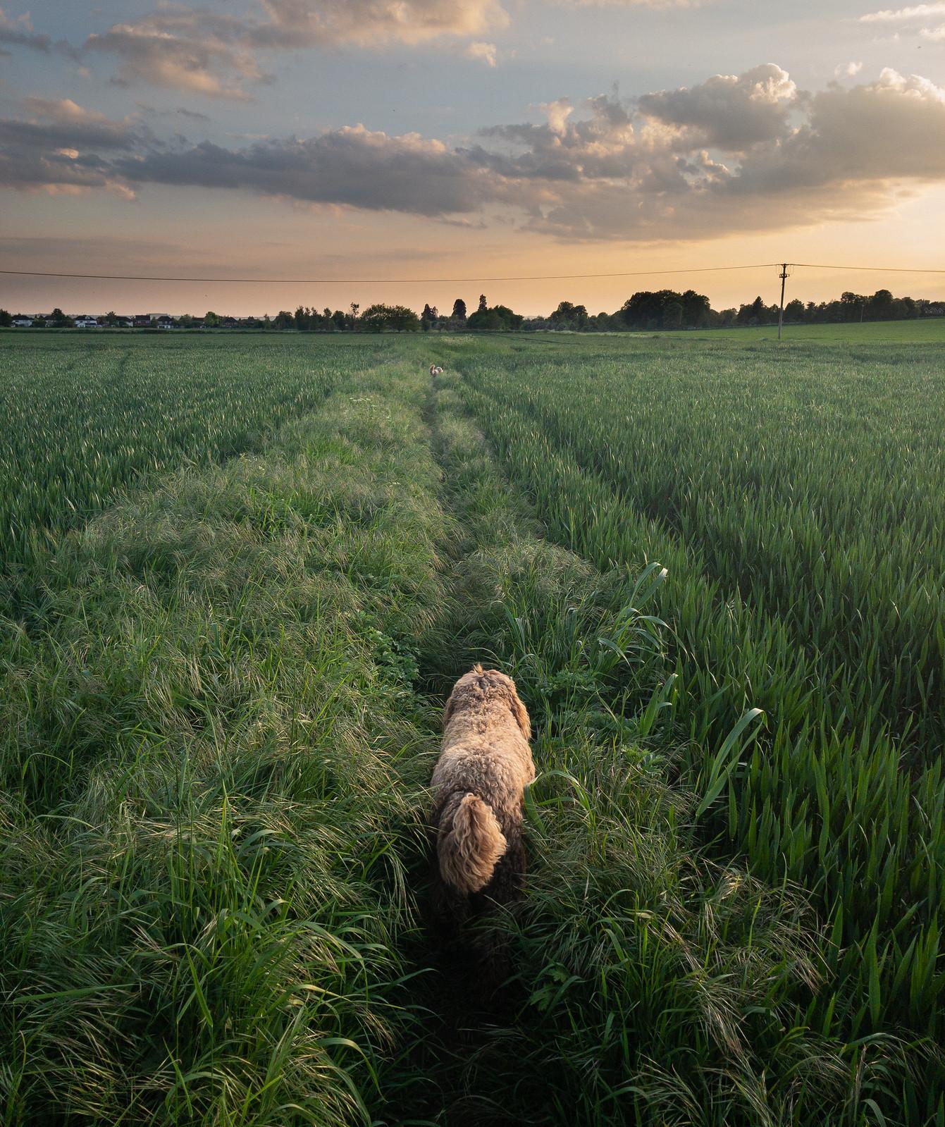 Long walk to the pub