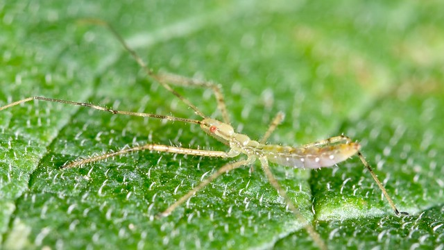 Insect on Spiny Leaf