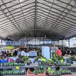 The outside market at Preston