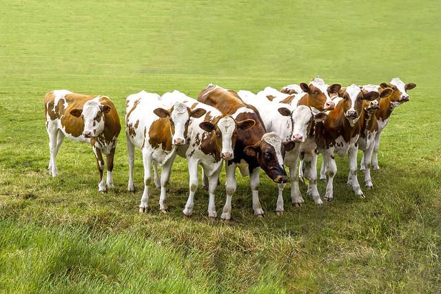 Have we achieved herd immunity?