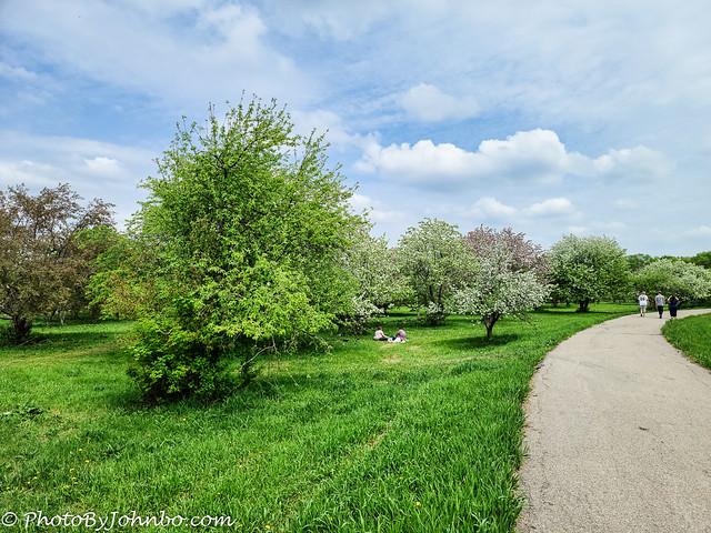 Orchard Glen-2