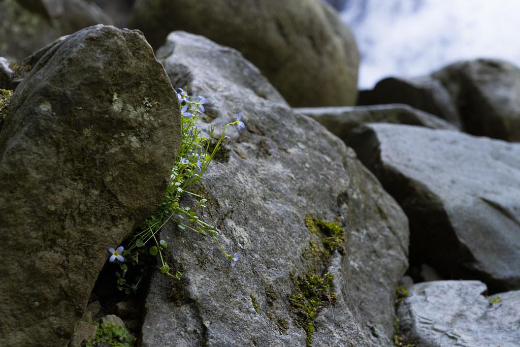Little Plants Beneath the Falls