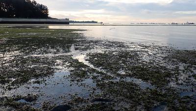 Possible dugong feeding trails, East Coast Park, May 2021
