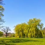 Haslam Park scene
