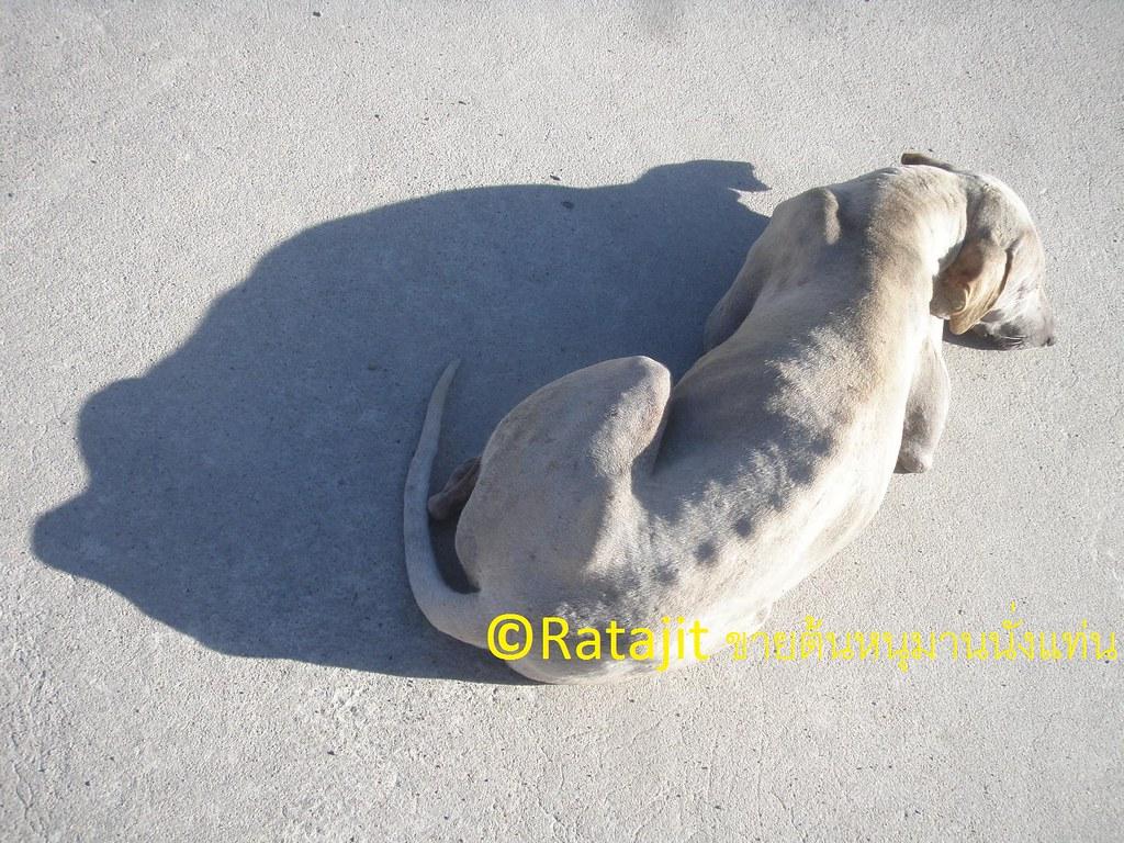 สุนัขในพระพุทธประวัติ