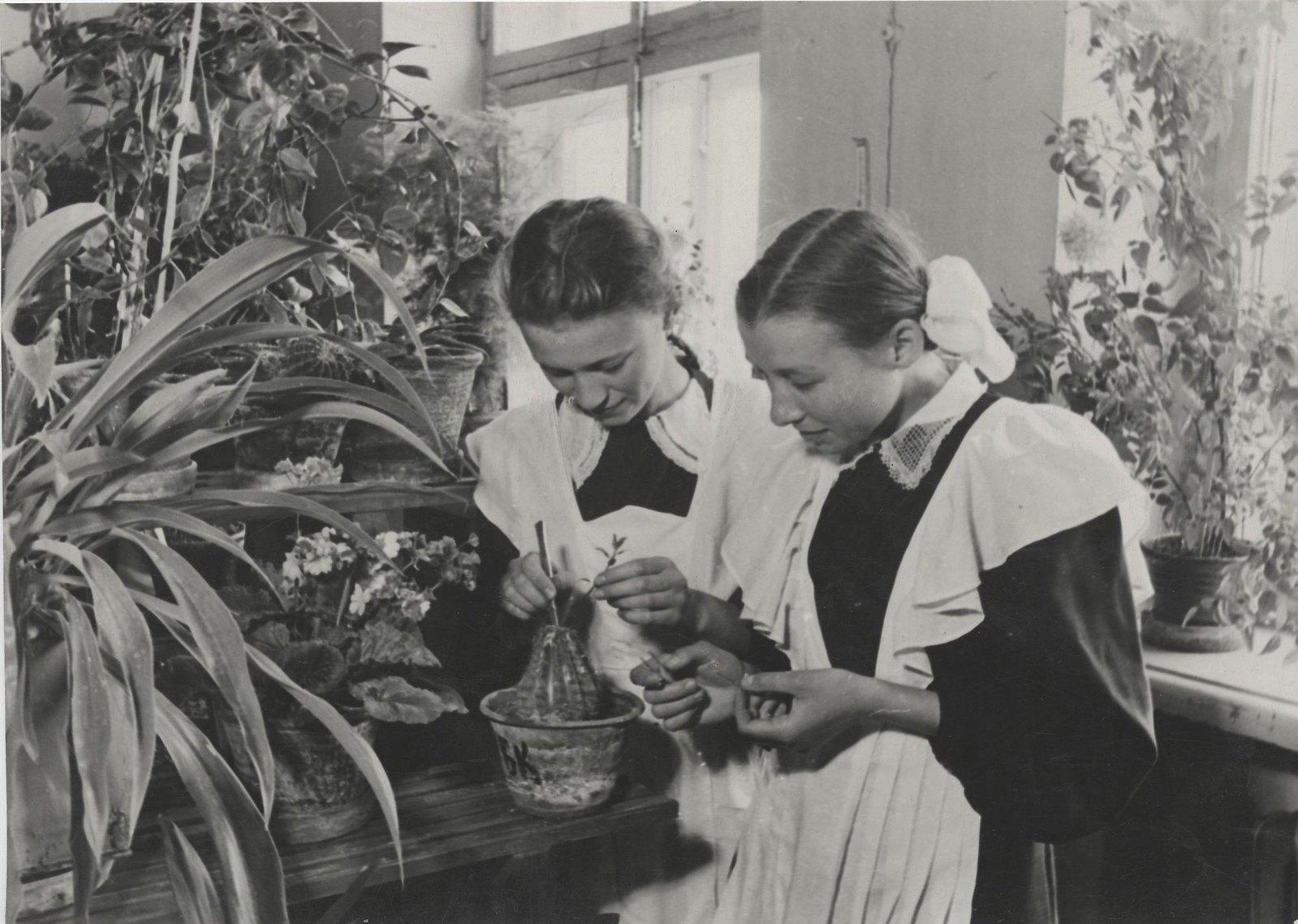 1950. В школе
