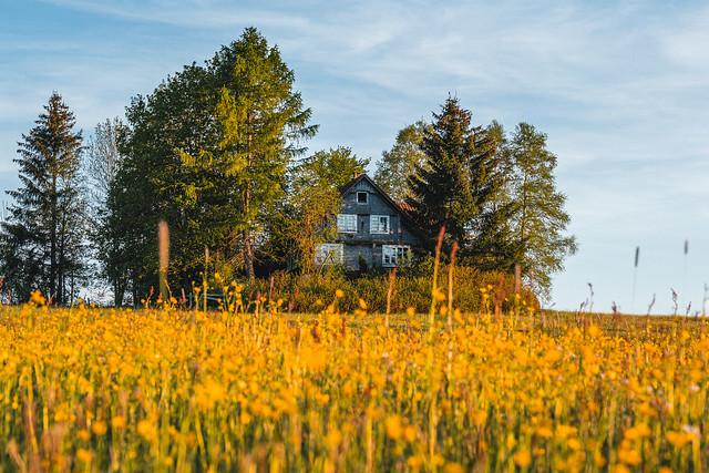 abandoned house - summer