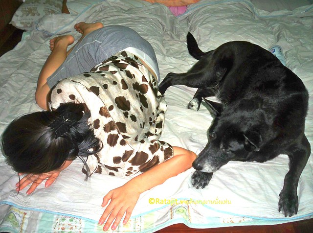 โรคไต ชนิดเฉียบพลัน ในน้องหมา