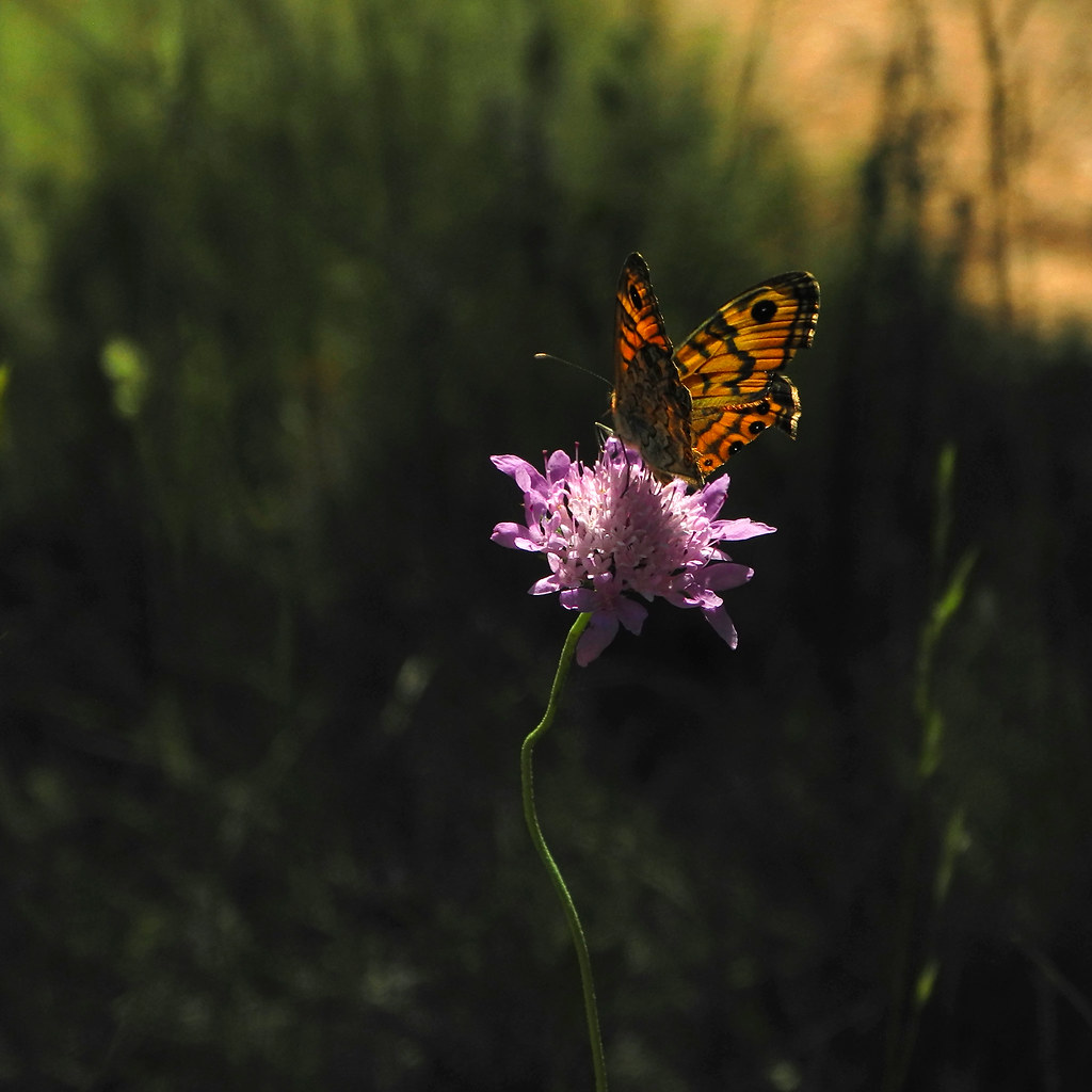 A power of Butterfly