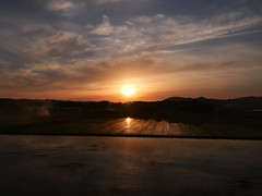 Sun sets over rice paddy (1)